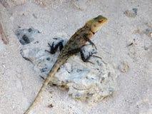 Reptile sur la roche images stock