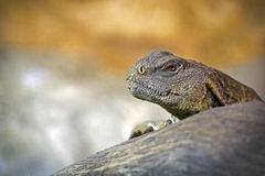 Reptile Stock Photography