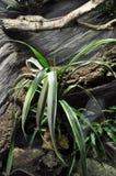 Reptile terrarium Royalty Free Stock Photos