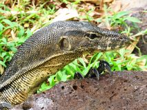 Reptile, Terrestrial Animal, Scaled Reptile, Fauna stock photo