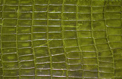 Reptile Texture Stock Image