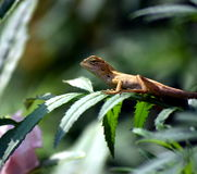 A reptile on a tree Stock Images
