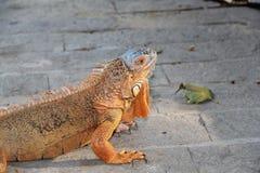 Reptile, year 2015 Stock Photo