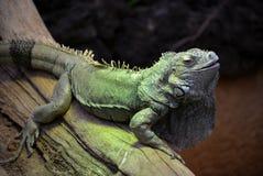 Reptile Stock Image