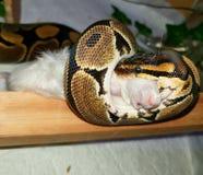 reptiles Photos libres de droits