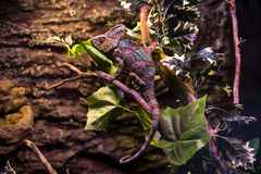 reptiles Image stock