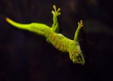 reptiles Fotografía de archivo