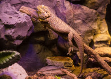 reptiles Photographie stock