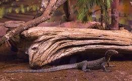 reptiles Imagenes de archivo