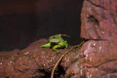 reptiles Photo stock