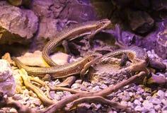 reptiles Imagen de archivo