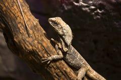 reptiles Imagen de archivo libre de regalías