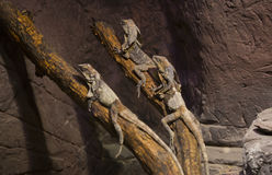 reptiles Image libre de droits