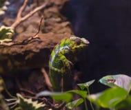 reptiles Photos stock