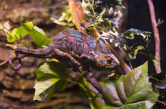 reptiles Fotos de archivo libres de regalías