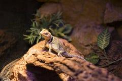 reptiles Fotos de archivo