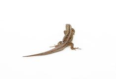 Reptiles. On the neutral background Stock Photo