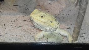 reptiles photos stock