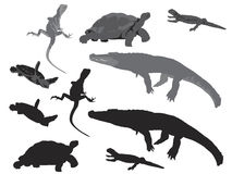Reptiles and amphibians Stock Image