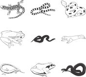 Reptiles and Amphibians. An illustrated icon set of amphibians and reptiles Royalty Free Stock Photography