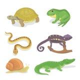 Reptiles and amphibians decorative set of crocodile turtle snake chameleon Royalty Free Stock Image
