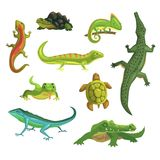 Reptiles and amphibians set of vector Illustrations Royalty Free Stock Photo