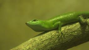 Reptiles, animales salvajes almacen de metraje de vídeo