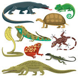 Reptiles animals vector set. Reptile and amphibian in front of white background. Colorful fauna illustration snake predator reptiles animals. Reptiles animals Stock Photos