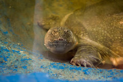Reptiles de los animales Fotos de archivo libres de regalías