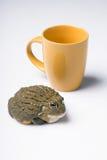 Reptiles en el fondo blanco Imagen de archivo