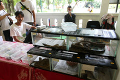 Reptiles exhibition. Various reptiles exhibited a city park in the city of Solo, Central Java, Indonesia Stock Photography