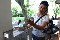 Reptiles exhibition. Various reptiles exhibited a city park in the city of Solo, Central Java, Indonesia Stock Image