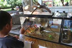 Reptiles exhibition. Various reptiles exhibited a city park in the city of Solo, Central Java, Indonesia Stock Photo