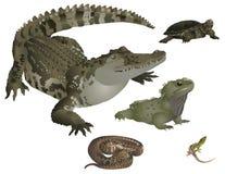 Reptiles fijados Imagenes de archivo