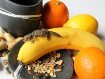 Reptiles on Food - Teratolepis fasciata gecko male on banana, with fruit and seeds. Reptiles on Food - Teratolepis fasciata gecko male on banana, with oranges royalty free stock photo