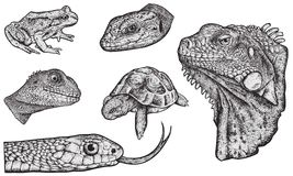 "Reptiles - Hand Drawn. Set of 6 reptiles highly detailed. To remove/change the fill color, just open the group of the reptile (in Illustrator), select the "" Stock Images"