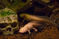 Reptiles Stock Image