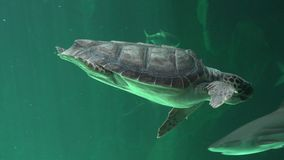 Reptiles And Sea Turtles Stock Images