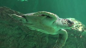 Reptiles And Sea Turtles Royalty Free Stock Photography