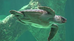 Reptiles And Sea Turtles stock video footage