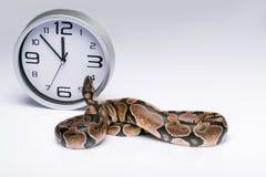 Reptiles sur le fond blanc Images stock