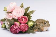 Reptiles sur le fond blanc Photographie stock libre de droits