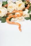 Reptiles sur le fond blanc Photo stock