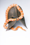 Reptiles sur le fond blanc Image libre de droits