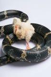 Reptiles sur le fond blanc Photo libre de droits