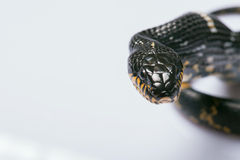 Reptiles sur le fond blanc Photos stock