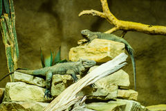Reptiles in a terrarium Royalty Free Stock Photo
