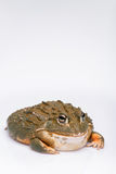 Reptiles on white background Stock Image