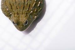 Reptiles on white background Royalty Free Stock Photos
