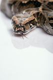 Reptiles on white background royalty free stock photos